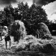 © Uģis Niedre. Collecting hay in Vitrupe meadow. Limbazi region, 1980