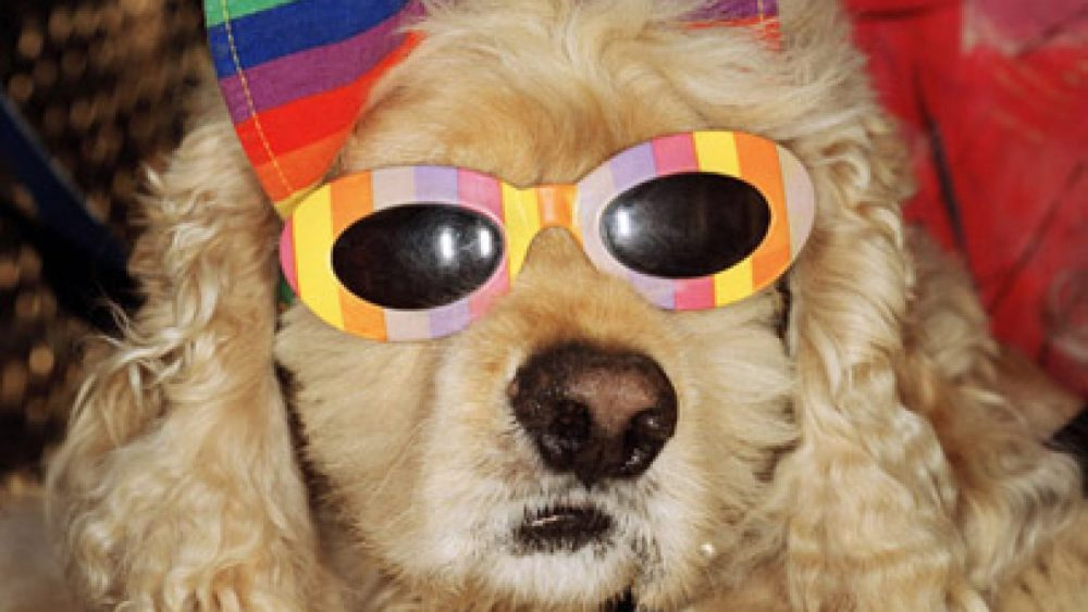 Martin Parr. A dog with sunglasses, Venice Beach, California 1998