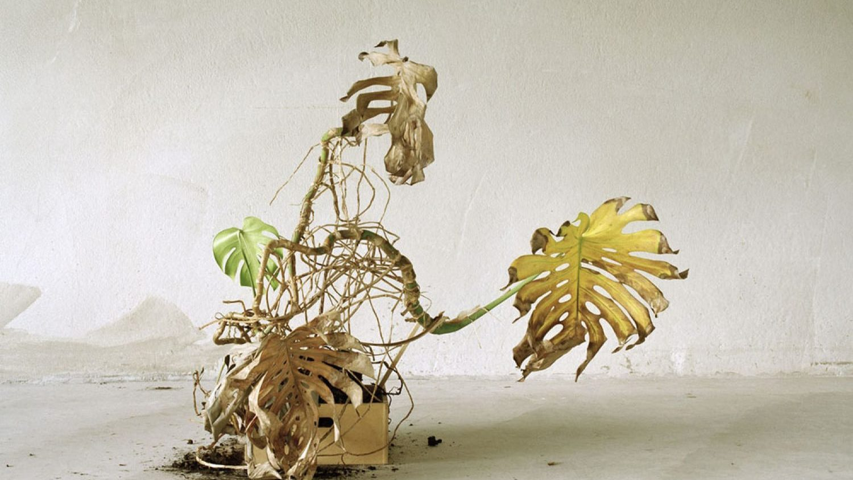 Sara Bjarland. From the series The Forsaken, 2011-12